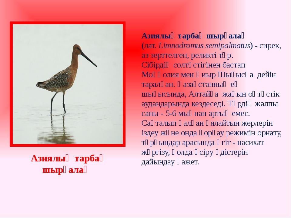 Азиялық тарбақ шырғалақ (лат. Limnodromus semipalmatus) - сирек, аз зерттелг...