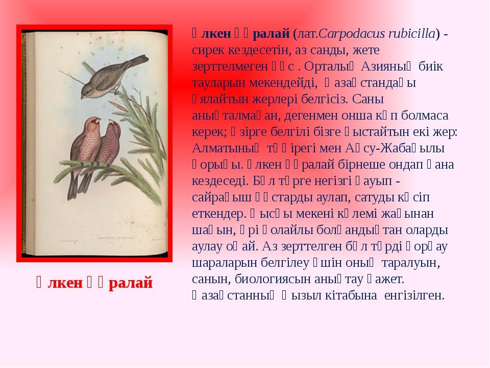 Үлкен құралай(лат.Carpodacus rubicilla) - сирек кездесетін, аз санды, жете з...