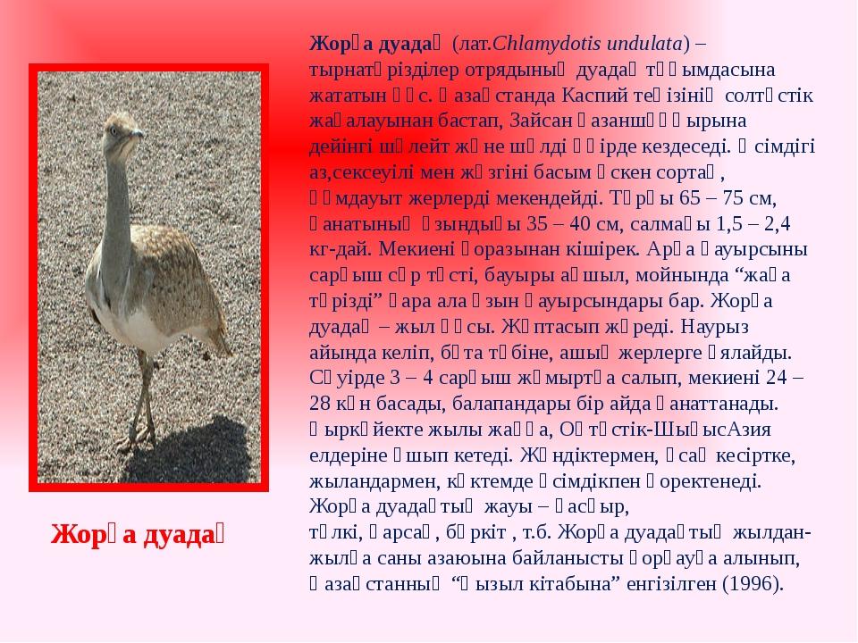Жорға дуадақ(лат.Chlamydotis undulata) –тырнатәрізділеротрядының дуадақ тұқ...
