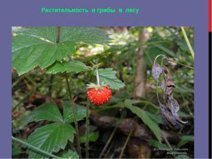 Растительность и грибы в лесу