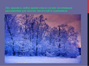 Лес красив в любое время года и служит источником вдохновения для поэтов, пи