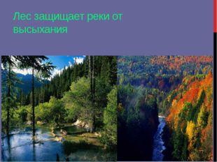 Лес защищает реки от высыхания