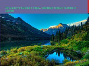 Леса растут высоко в горах, защищая горные склоны от эрозии