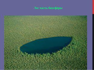 Лес часть биосферы