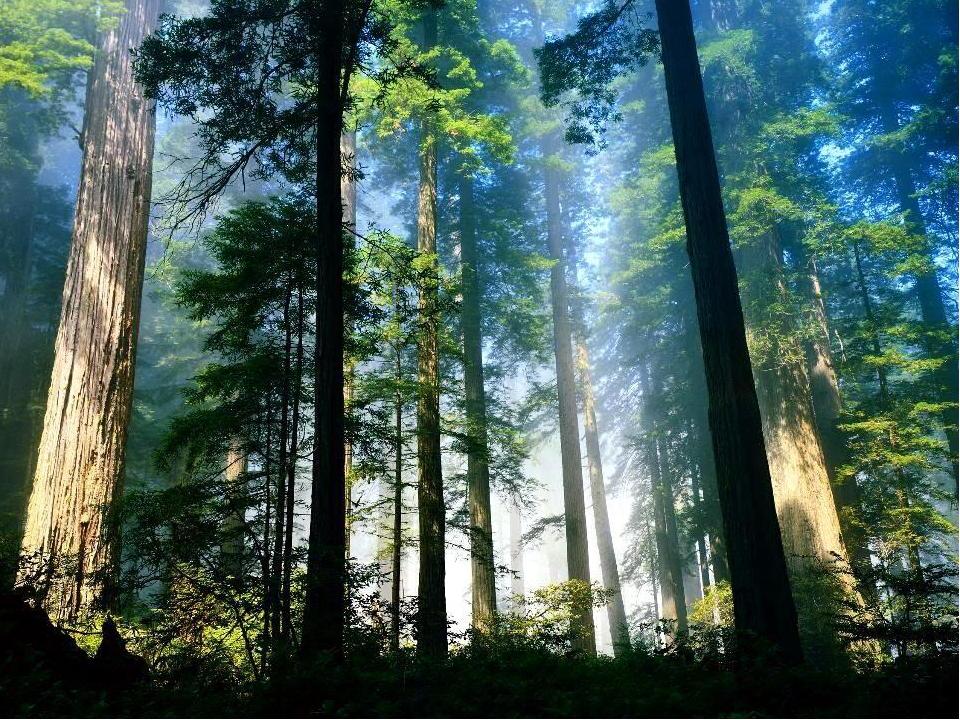 Деревья в лесу
