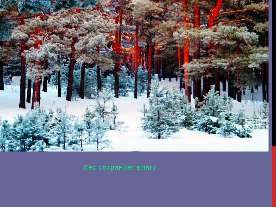 Лес сохраняет влагу
