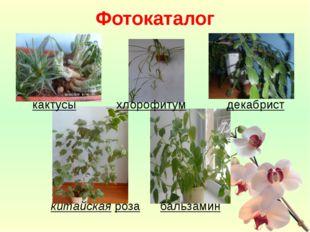 кактусы хлорофитум декабрист китайская роза бальзамин Фотокаталог