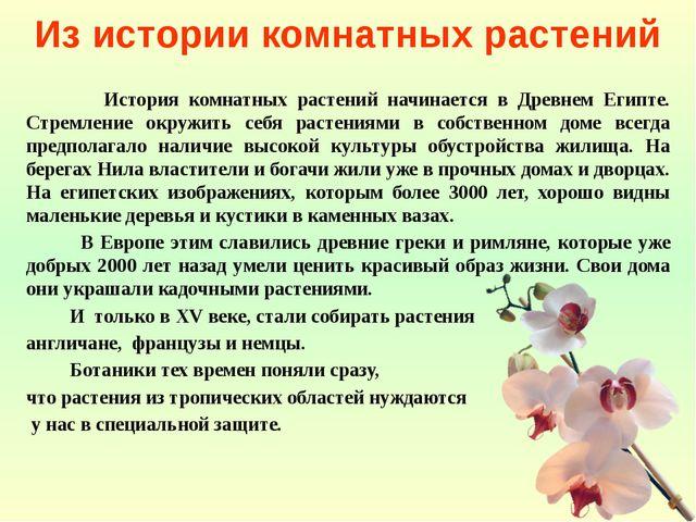 Из истории комнатных растений История комнатных растений начинается в Древнем...