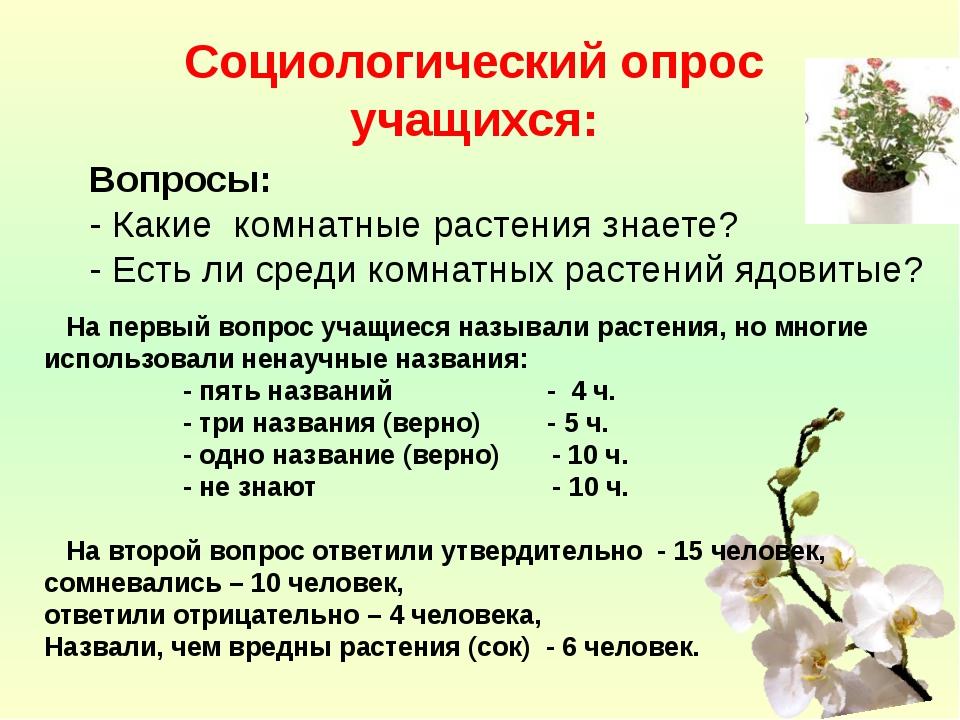 Социологический опрос учащихся:  Вопросы: - Какие комнатные растения знаете?...