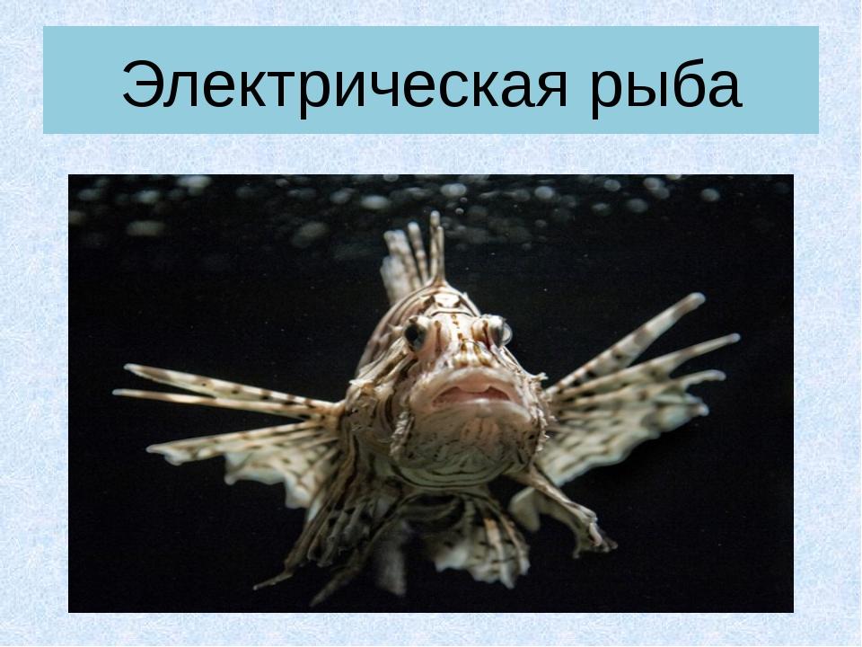 Электрическая рыба