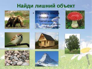 Найди лишний объект На слайде представлены объекты: медведь, солнце, мухомор,