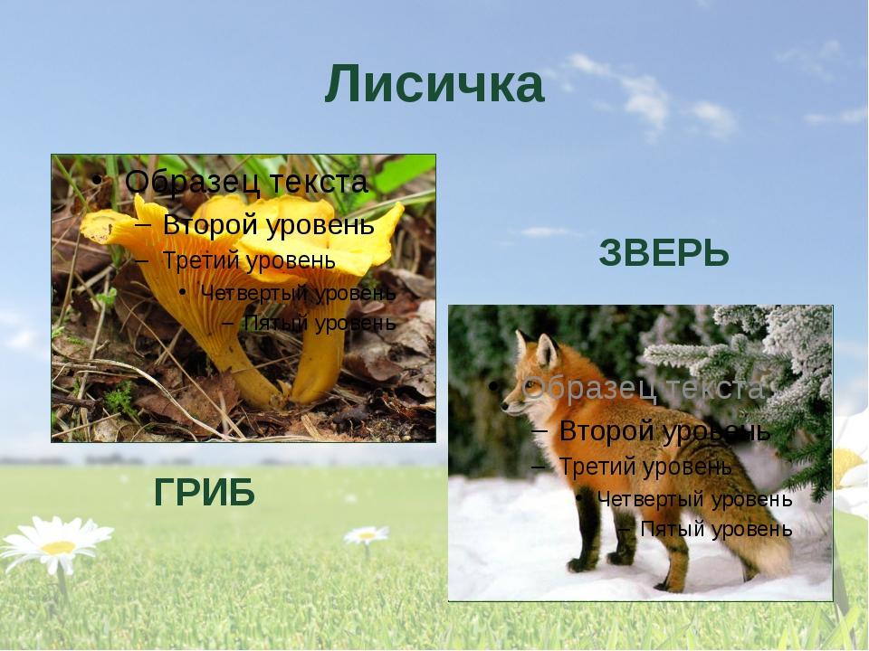 Лисичка ГРИБ ЗВЕРЬ Что скажите о слове «лисичка? ( У слова несколько значений...