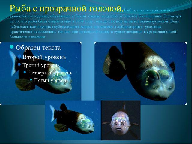 Рыба с прозрачной головой.Рыба с прозрачной головой-уникальное создание, обит...