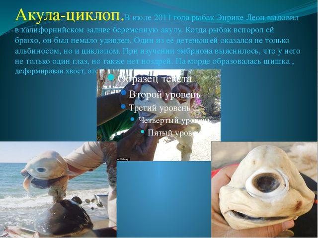 Акула-циклоп.В июле 2011 года рыбак Энрике Леон выловил в калифорнийском зали...