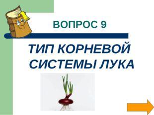 ВОПРОС 9 ТИП КОРНЕВОЙ СИСТЕМЫ ЛУКА