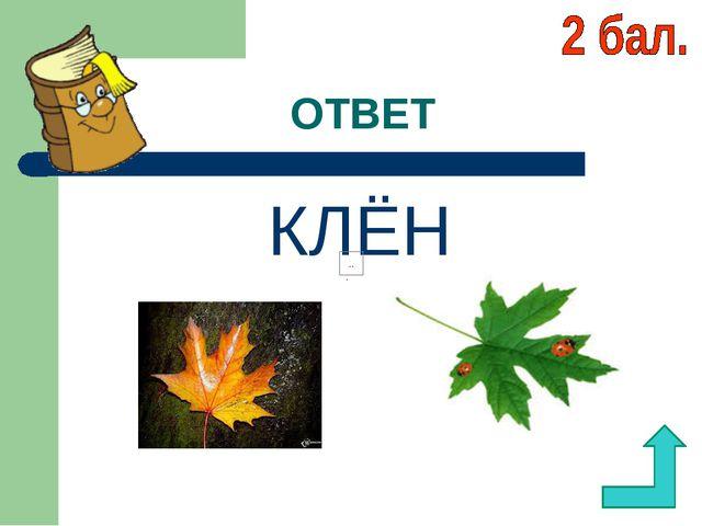 ОТВЕТ КЛЁН