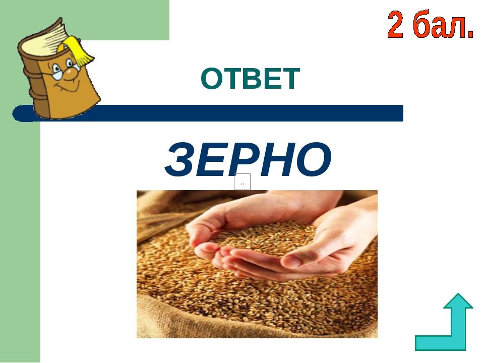 ОТВЕТ ЗЕРНО