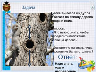Белка вылезла из дупла и бегает по стволу дерева вверх и вниз. Вопросы: - Что