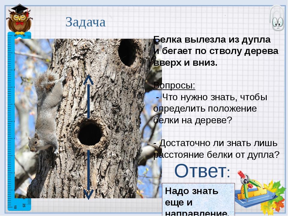 Белка вылезла из дупла и бегает по стволу дерева вверх и вниз. Вопросы: - Что...