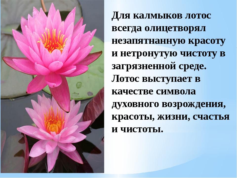 Стих цветка лотоса