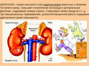АДРЕНАЛИН, гормон мозгового слоя надпочечников животных и человека. Поступая