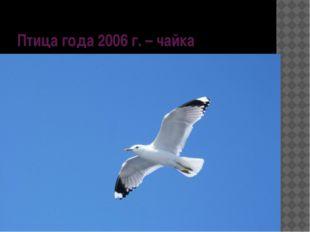 Птица года 2006 г. – чайка