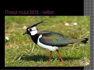 Птица года 2010 - чибис
