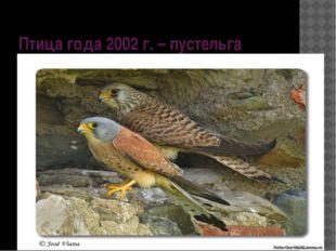 Птица года 2002 г. – пустельга