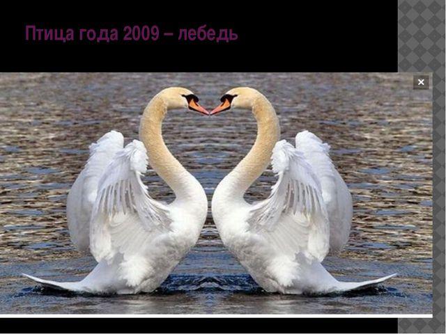 Птица года 2009 – лебедь
