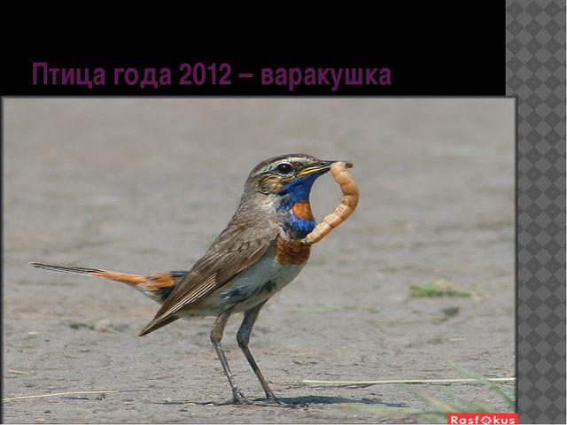 Птица года 2012 – варакушка