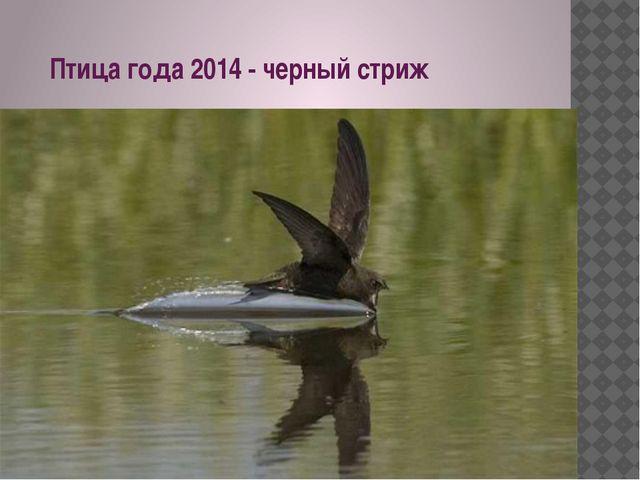 Птица года 2014 - черный стриж