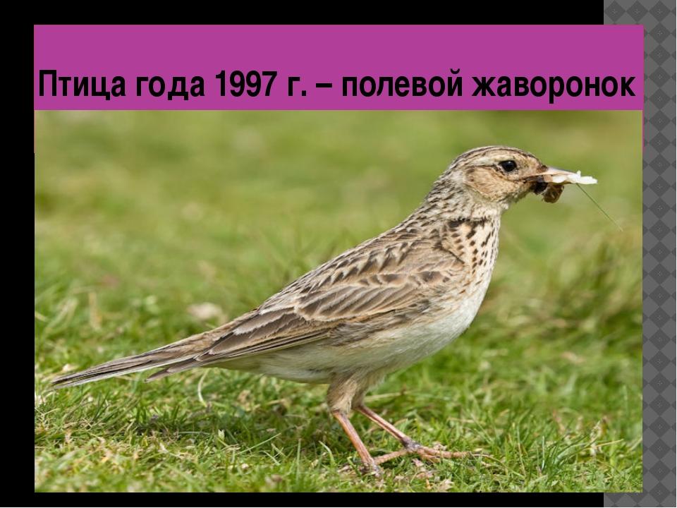 Птица года 1997 г. – полевой жаворонок