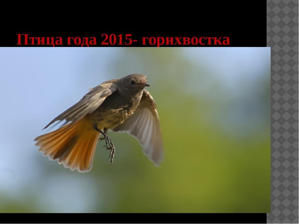 Птица года 2015- горихвостка