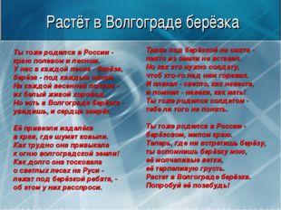 Растёт в Волгограде берёзка Ты тоже родился в России - краю полевом и лесном.