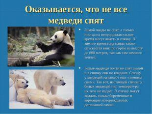 Оказывается, что не все медведи спят Зимой панды не спят, а только иногда на