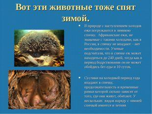 Вот эти животные тоже спят зимой. В природе с наступлением холодов ежи погруж