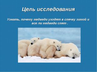 Цель исследования Узнать, почему медведи уходят в спячку зимой и все ли медве