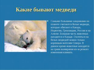 Какие бывают медведи Самыми большими хищниками на планете считаются белые мед
