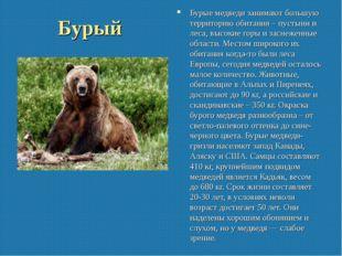 Бурый Бурые медведи занимают большую территорию обитания – пустыни и леса, вы