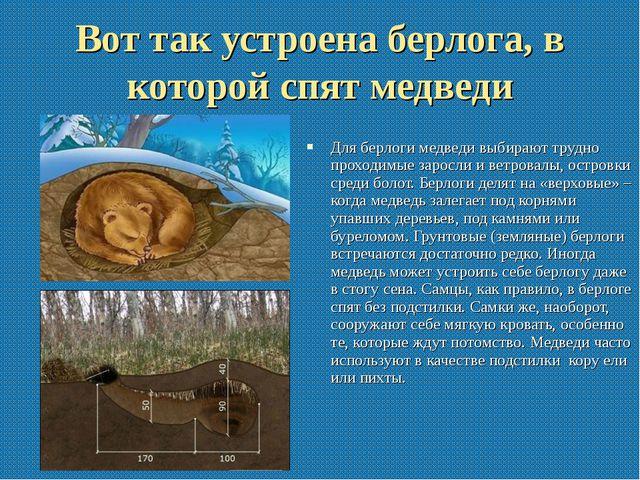 Вот так устроена берлога, в которой спят медведи Для берлоги медведи выбирают...