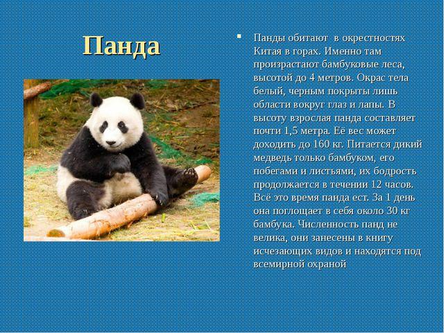 Панда Панды обитают в окрестностях Китая в горах. Именно там произрастают бам...