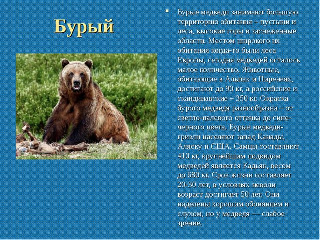 Бурый Бурые медведи занимают большую территорию обитания – пустыни и леса, вы...