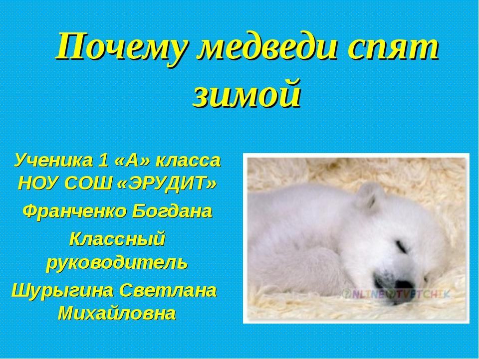 Почему медведи спят зимой Ученика 1 «А» класса НОУ СОШ «ЭРУДИТ» Франченко Бог...