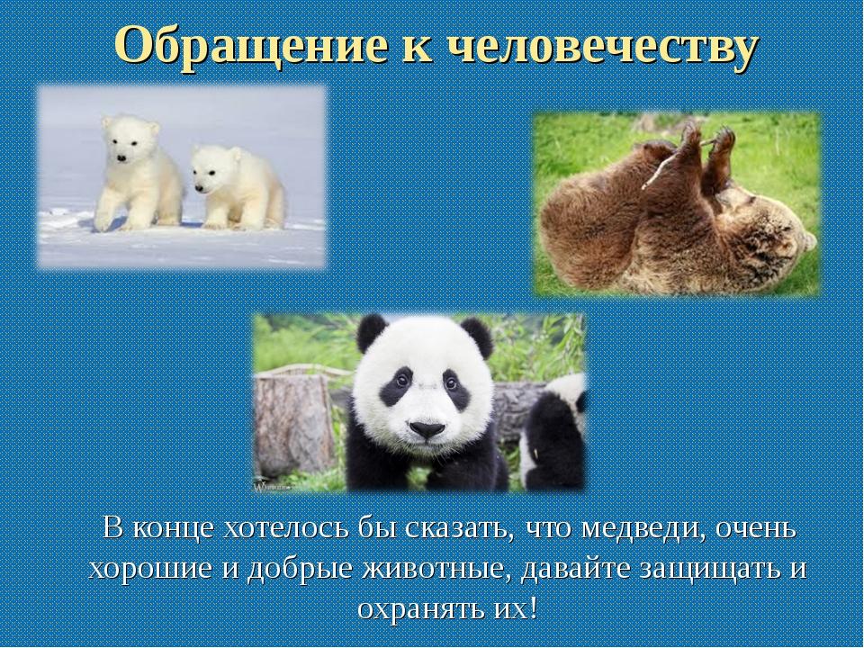 Обращение к человечеству В конце хотелось бы сказать, что медведи, очень хоро...