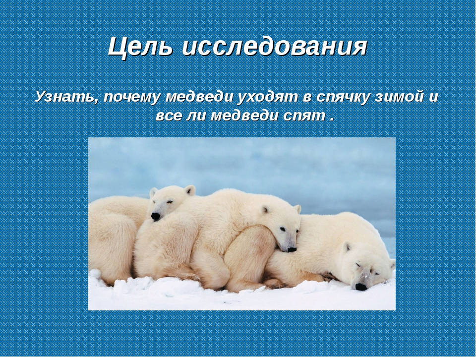 Цель исследования Узнать, почему медведи уходят в спячку зимой и все ли медве...
