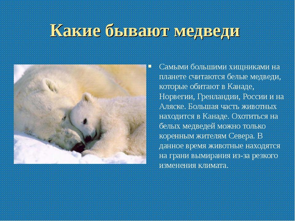 Какие бывают медведи Самыми большими хищниками на планете считаются белые мед...