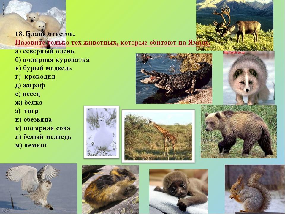 18. Бланк ответов. Назовите только тех животных, которые обитают на Ямале. а...