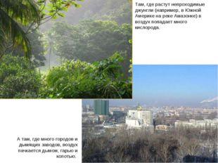 Леса и города Там, где растут непроходимые джунгли (например, в Южной Америке