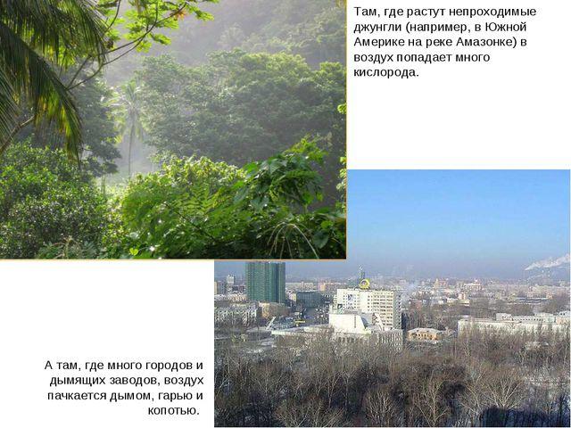 Леса и города Там, где растут непроходимые джунгли (например, в Южной Америке...