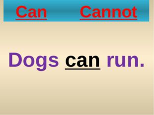 Can Cannot Dogs can run.